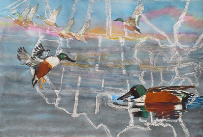 Rita Sklar Vanishing Northern Shovelers